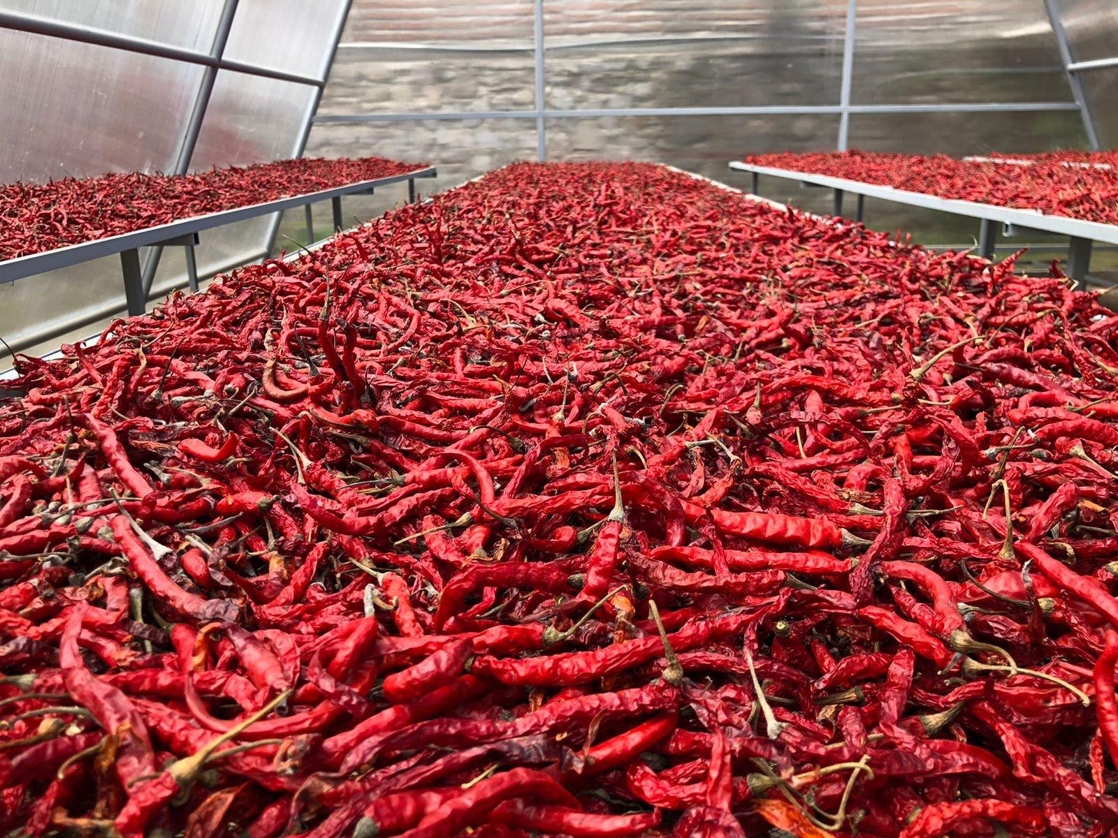 Tingkatkan Produk Hortikultra, Kementan Dukung Industri Pertanian Gunakan Teknologi Ini - JPNN.com