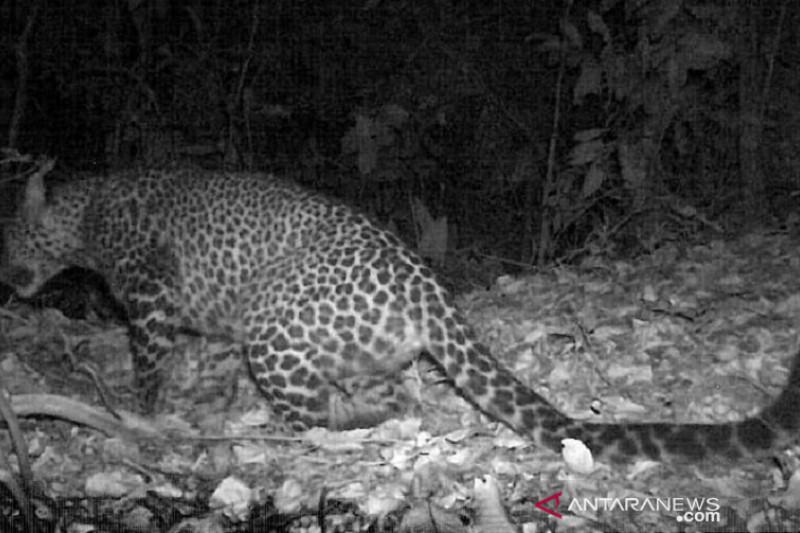 Inilah Penjaga Hutan Gunung Sanggabuana - JPNN.com