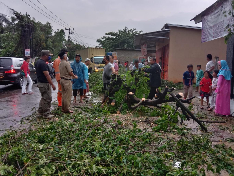 Pohon Tumbang Menimpa Pajero di Depok, 2 Orang Bernasib Nahas - JPNN.com