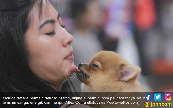 Pentingnya Mengenal Karakter dan Sifat Anjing Peliharaan Anda - JPNN.COM