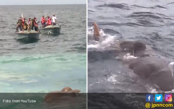 12 Jam Misi Ajaib Menyelamatkan Gajah Malang di Laut - JPNN.COM