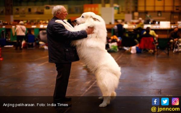 Pelihara Anjing Bisa Bantu Cegah Penyakit Ini - JPNN.COM