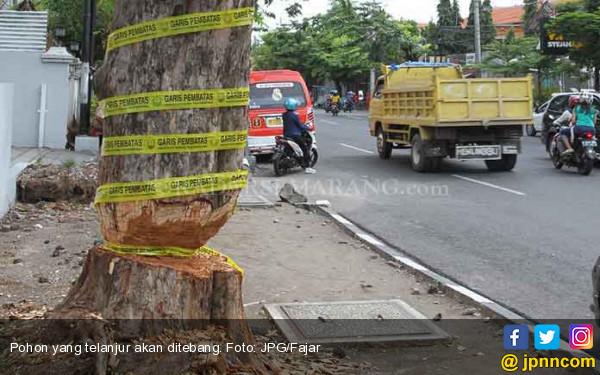 Ribuan Pohon Rawan Tumbang Bakal Ditertibkan - JPNN.COM