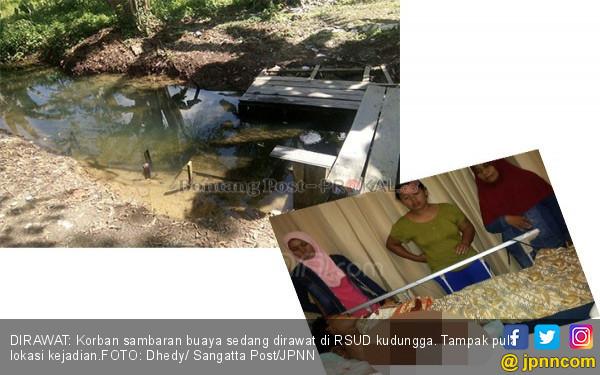 Diterkam Buaya, Ibu Rumah Tangga Diseret ke Sungai - JPNN.COM