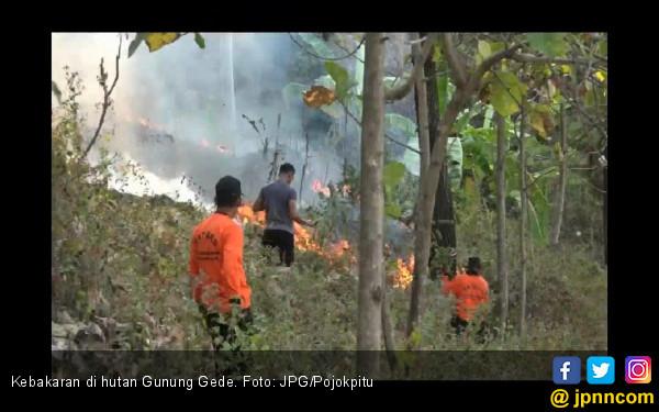 Hutan Gunung Gede Terbakar 10 Hektar - JPNN.COM