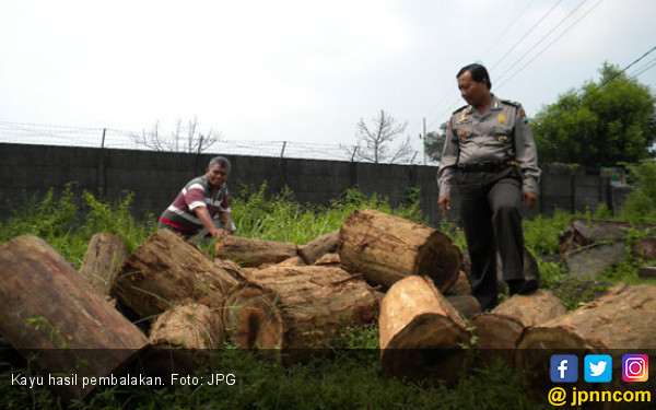 Pembalakan Liar Bikin Rusak Hutan Seruyan - JPNN.COM