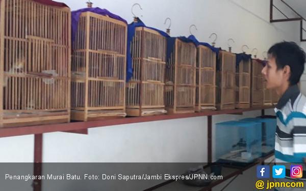 Sebulan 20 Anakan Murai Batu, Per Ekor Laku Rp 4 Juta - JPNN.COM