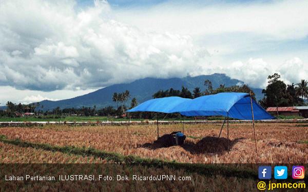 Sudah 700 Ribu Hektare Lahan Masuk Asuransi Pertanian - JPNN.COM