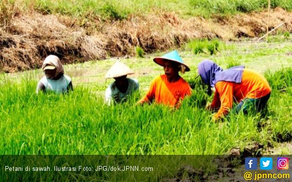 petani-semakin-meminati-asuransi-berbasis-aplikasi-siap