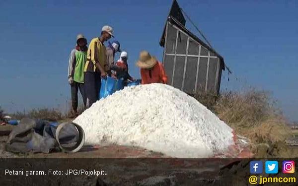 10 Ribu Ton Garam Rakyat Diserap dengan Harga Tinggi - JPNN.COM