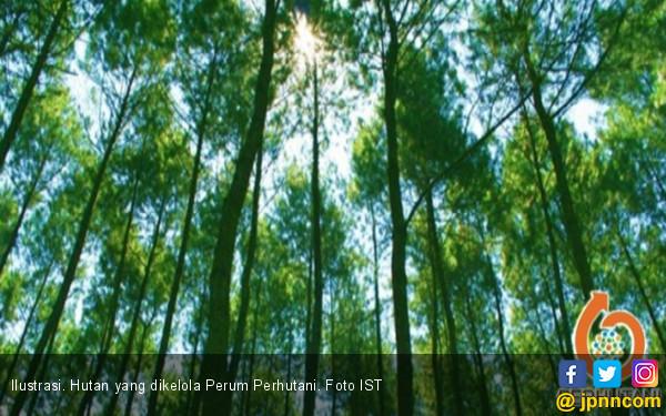 Perhutani dan KIFC Korea Kerja Sama Bangun Hutan - JPNN.COM