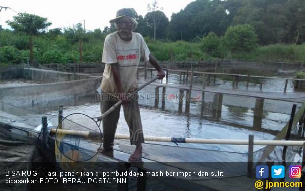 Pembudidaya Ikan Kesulitan Jual Hasil Panen - JPNN.COM
