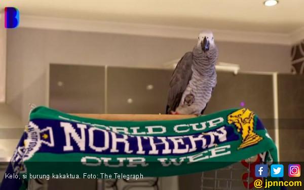 Burung Kakaktua Ini Ditolak Nonton Pertandingan Favoritnya - JPNN.COM