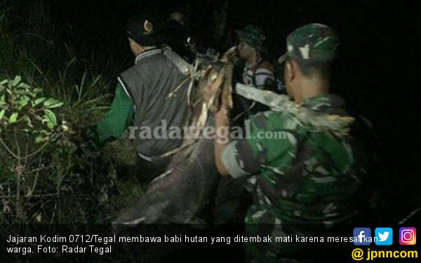 Babi Hutan Berkeliaran, Pak Dandim Turun Tangan - JPNN.COM