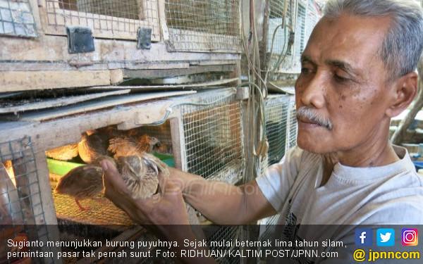 Beternak Puyuh Modal Rp 10 Juta, Keuntungan Lumayan - JPNN.COM