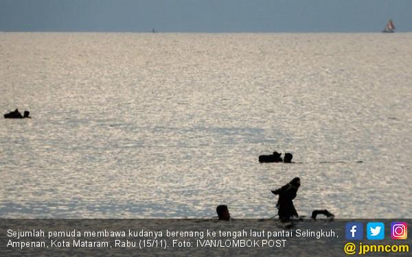 Kuda Pacu Berenang di Pantai, Berendam Air Hangat, Dipijat - JPNN.COM