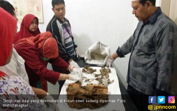 Lagi Memanen Sawit, Tukimin Temukan Tengkorak Manusia - JPNN.COM