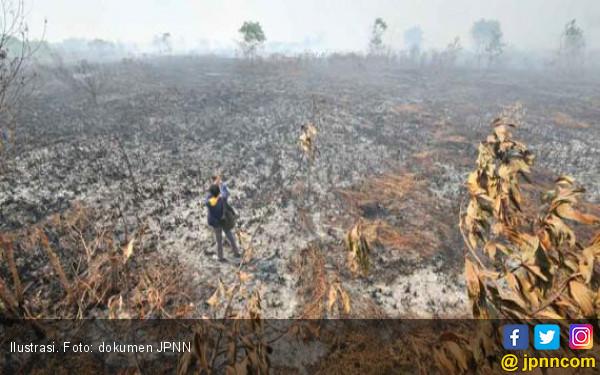 KLHK Ingin RAPP Pulihkan Lahan Gambut yang Terbakar - JPNN.com