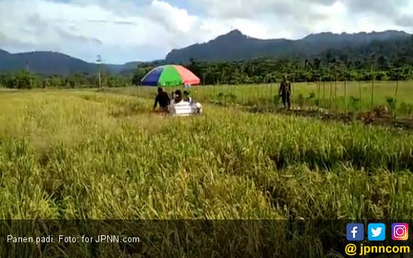 Panen Setiap Hari, Bukti di Bali Tidak Musim Paceklik - JPNN.COM