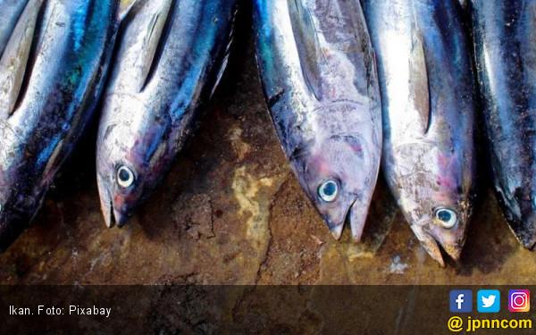 Bu Susi: Satu Hari Sudah 40 ton Ikan yang Dibuang - JPNN.COM
