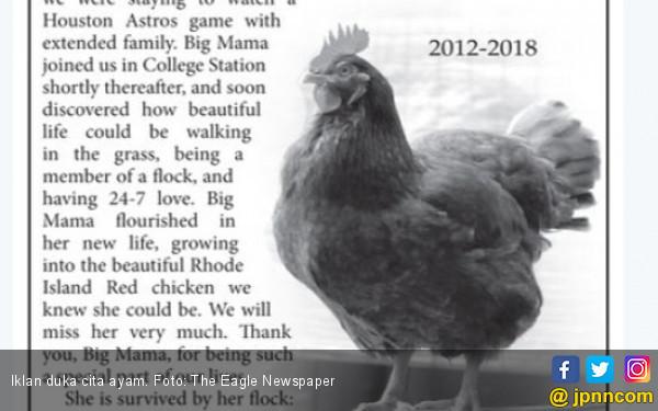 Ayam Kesayangan Mati, Tuan Buat Iklan di Koran - JPNN.COM