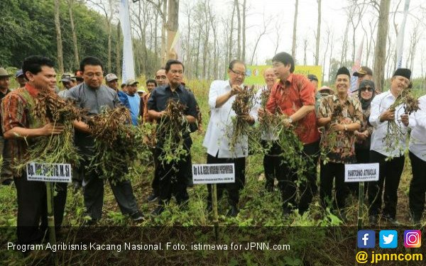 MUI dan KSP Gandeng GarudaFood, Perhutani, Panen Kacang - JPNN.COM