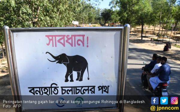 PBB Latih Pengungsi Rohingya Melawan Gajah Pembunuh - JPNN.com