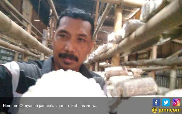 Honorer K2 Nyambi jadi Buruh Bangunan, Ada yang Tanam Jamur - JPNN.COM