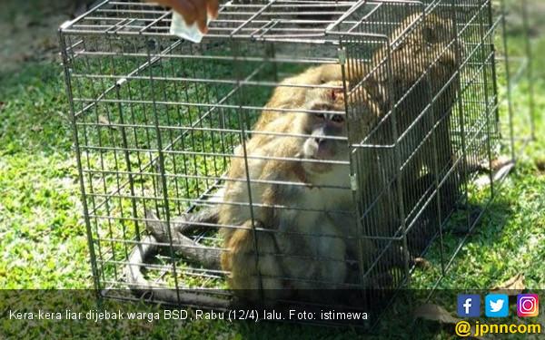 Empat Bayi Diserang Kawanan Kera - JPNN.COM