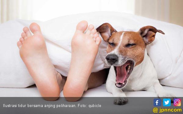 3 Alasan Jangan Tidur Bersama Anjing Anda - JPNN.COM