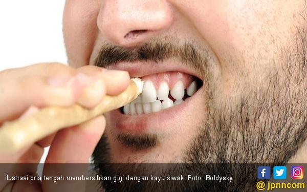 4 Manfaat Siwak untuk Kesehatan Gigi dan Mulut - JPNN.com