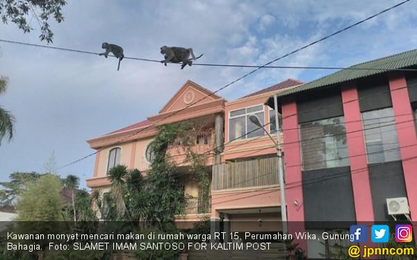 Kawanan Monyet Masuk Perumahan Mewah, Curi Makanan di Kulkas - JPNN.COM