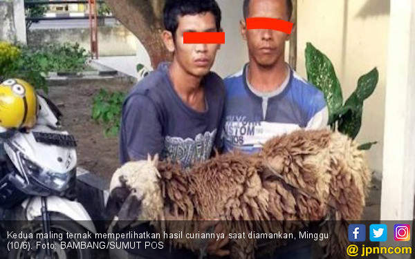 Dua Pemuda Ini Ditangkap saat Masukkan Ternak Warga ke Goni - JPNN.COM