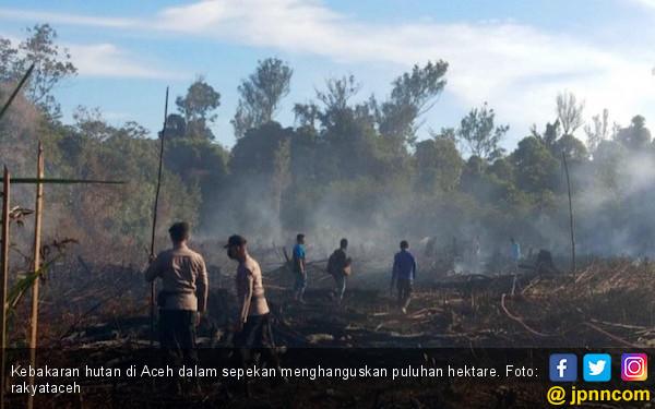 Sepekan, Puluhan Hektar Hutan Terbakar di Aceh - JPNN.COM