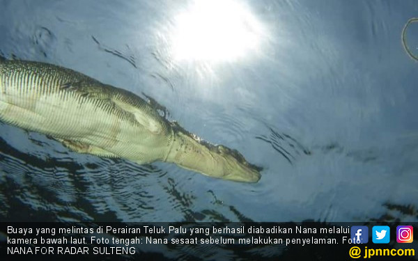 Nana Menyelam, Buaya Berenang di Atas Kepalanya, Ngeri! - JPNN.COM