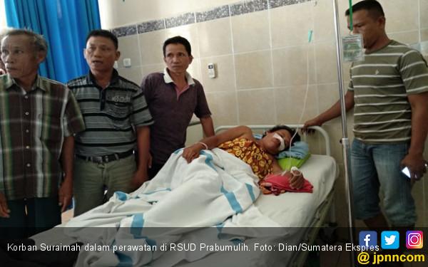 Suraimah Diserang Beruang Saat Menyadap Karet, Tragis - JPNN.COM