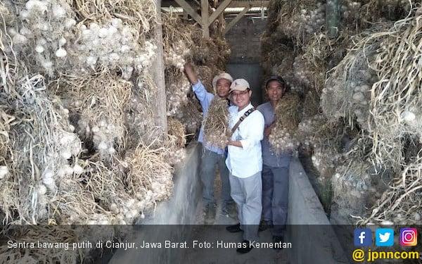 Cianjur Siap Jadi Penyangga Benih Bawang Putih di Jawa Barat - JPNN.COM