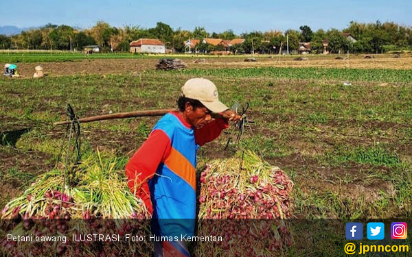 Kementan Targetkan Ekspor 15 Ribu Ton Bawang Merah Tahun ini - JPNN.COM