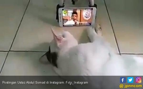 Masyaallah, Kucing saja Senang sama Ceramah Abdul Somad - JPNN.COM