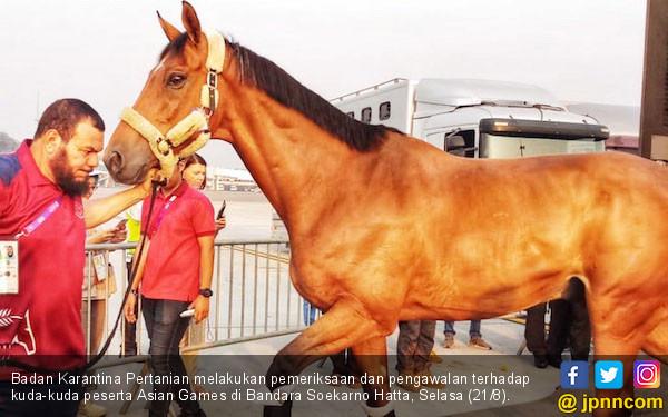 Badan Karantina Pertanian Pemeriksaan Pengawalan Kuda Peserta Asian Games Bandara Soekarno Hatta Selasa 218 Negara