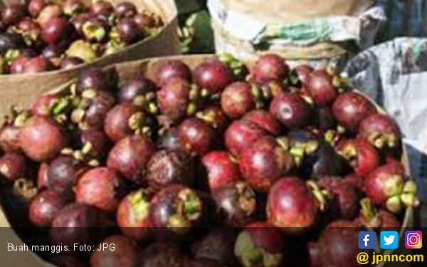 Tahun Ini Pemkab Purwakarta Bidik Ekspor Manggis ke Timur Tengah - JPNN.com