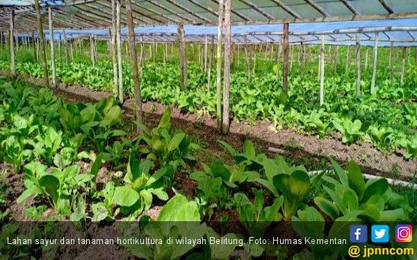 Izin Dipangkas, Ekspor Sayuran Semakin Meningkat - JPNN.COM