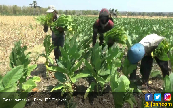 Jangan Sampai Rokok Elektrik Hancurkan Petani Tembakau - JPNN.com