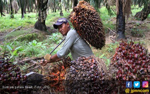 Kementan Perjuangkan Ekspor dan Kesejahteraan Petani Sawit - JPNN.com