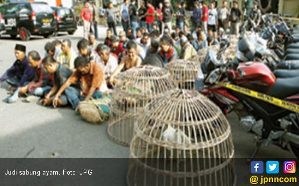 45 Orang Pemalas Tertangkap Sedang Berjudi Sabung Ayam - JPNN.COM