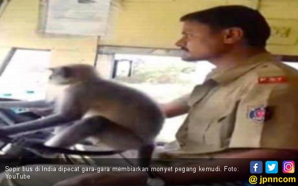 Biarkan Monyet Menyetir, Sopir Bus Dipecat - JPNN.COM