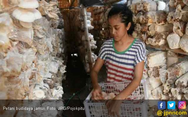 Menjamurnya Usaha Tani Jamur Berpeluang Ekspor - JPNN.com
