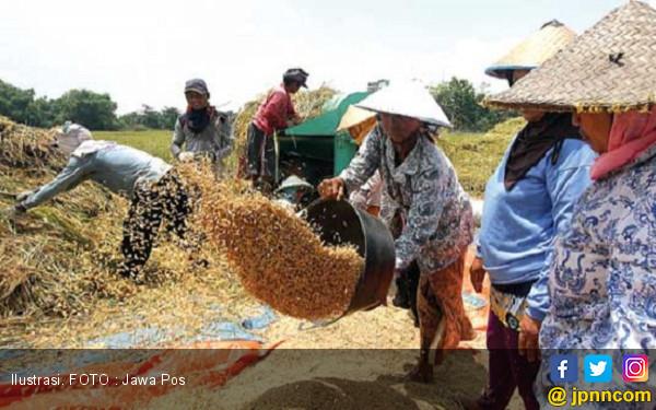 Ini Tiga Kabupaten Produsen Padi Tertinggi di Jatim - JPNN.COM