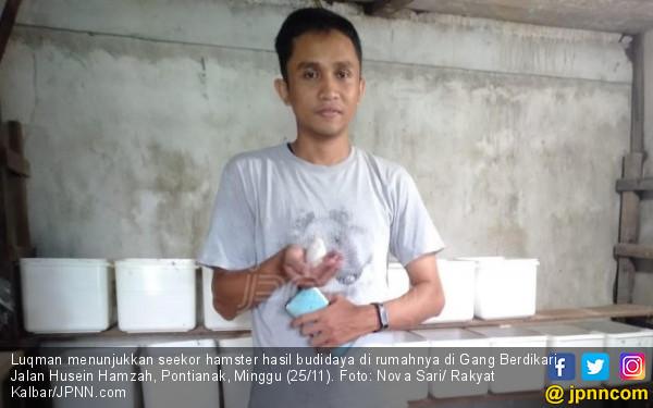 Beternak Hamster, Omzet Bisa Puluhan Juta Rupiah per Bulan - JPNN.COM