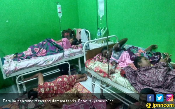 Warga Aceh Barat Terserang Malaria Monyet - JPNN.COM